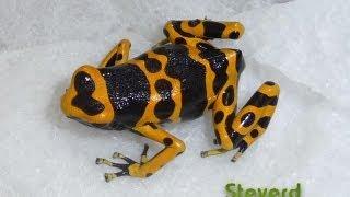 Poison Dart Frog Room 10-2012