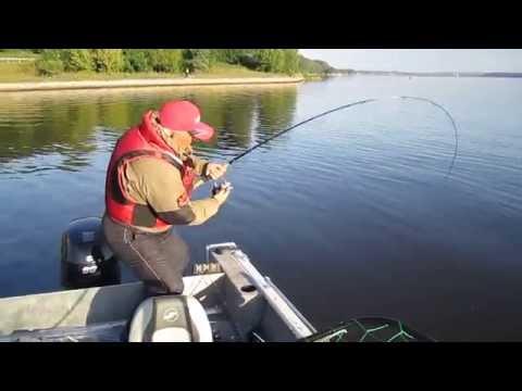 видео рыбалка в подмосковье на судака