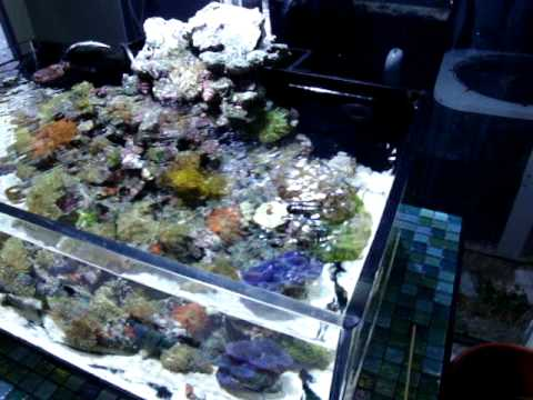 20 gallon shallow reef tank