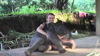 Baby Elephant Cuddles With Allie