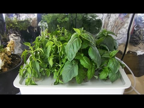 Pathonor Hydroponic System Update And First Tomatoes Of 2017