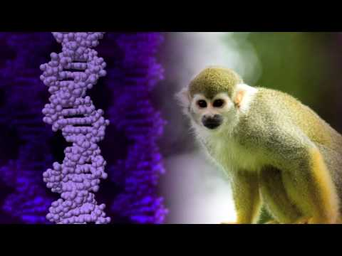 Science Today: Gene Therapy for Color Blindness | California Academy of Sciences
