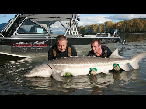 Sturgeon Fishing - Free Spirit on the Fraser River