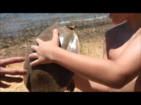Lake Sam Rayburn Reservoir & soft shell turtle adventure