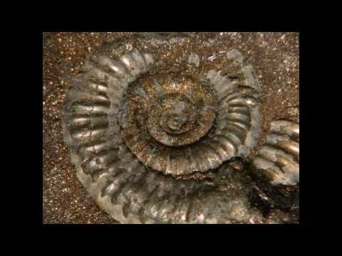 Jurassic Coast Dorset Fossil Finds