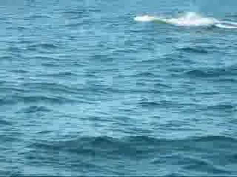 The whales of August - Brier Island Nova Scotia Video