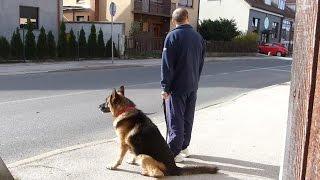 download lagu German Shepherd Dog _ Protocol To Go For A gratis