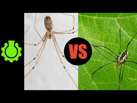 are-daddy-longlegs-spiders-re-8-animal-misconceptions-rundown.html