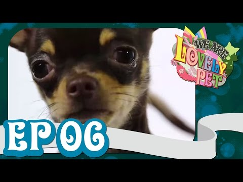VRZO - We Are Lovely Pet Ep6 18+