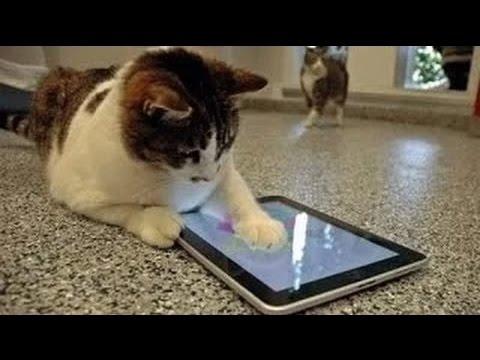 videos graciosos 2015 - videos de risa de gatos chistosos jugando con un Ipad