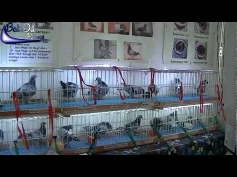 International Pigeon Market in Kassel, Germany (2012)