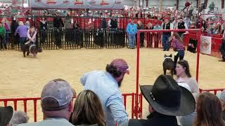 San Antonio 2019 placed 7th (judge's comments)