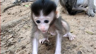 Super Cute Baby Monkey In Mila Group| This Will Shock Your Heart With His Great Action| So Active