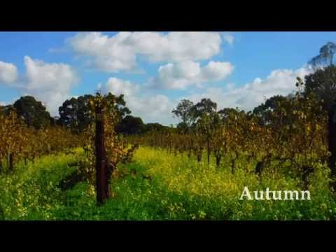 Harris Organic Wines - Seasons in the Swan Valley