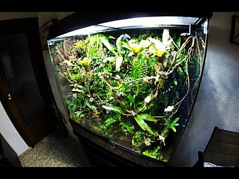 Paludarium set up