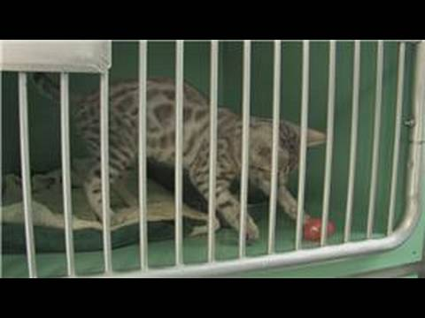 Natural Arthritis Treatment For Cats
