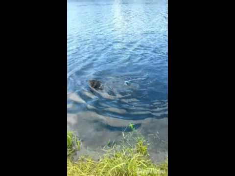 Coco having a swim
