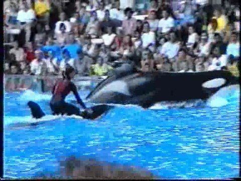 Killer  Wahle attacke  Show Orlando Seaworld  2000 Munich Music Videos