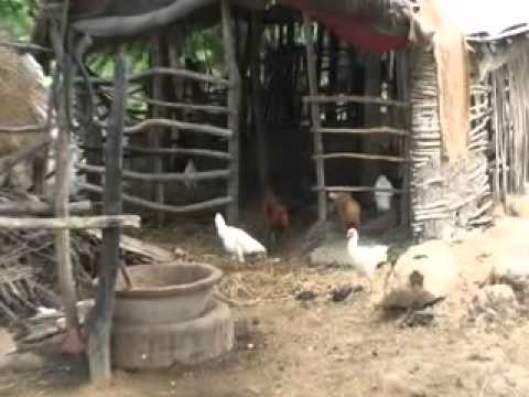 Fish Cum Poultry Farming
