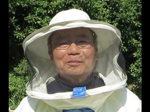 Мёд Japan. Японское пчеловодство.Как проверить