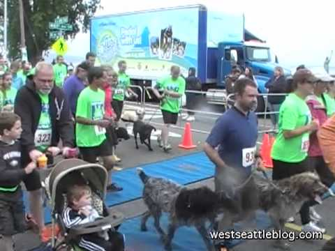 West Seattle 5K: The 2012 start!