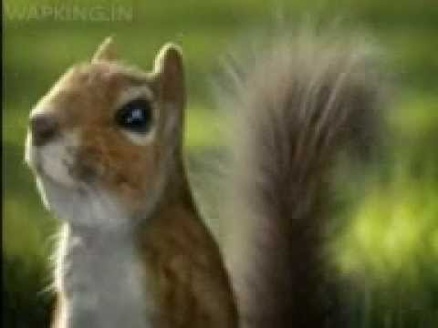 Nestle Kit Kat India Squirrel Break 2 video