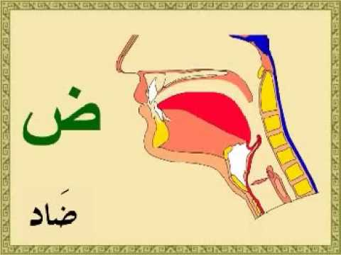 Arapça Harflerin Mahreçleri