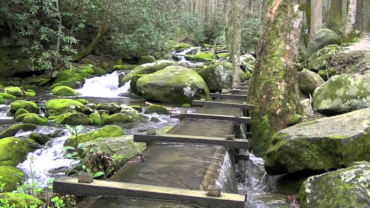 Roaring Fork Motor Nature Trail Great Smoky Mountains