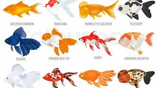 #Goldfish  All types of goldfish in one video