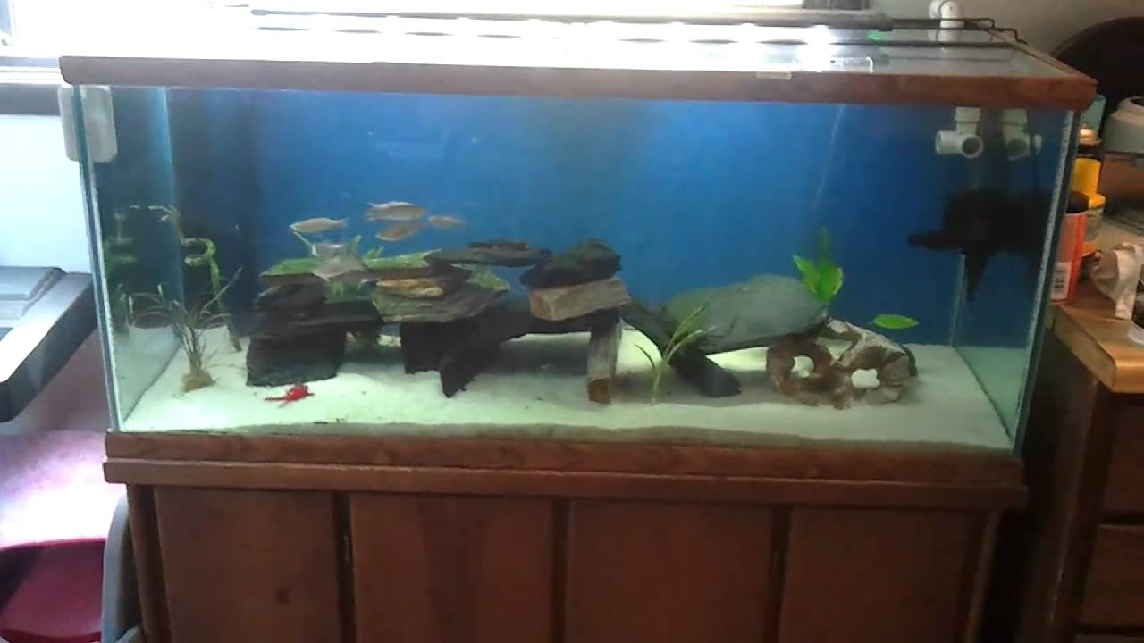 75 Gallon Freshwater Aquarium Youtube