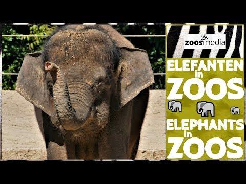 Die 3 wichtigsten Gründe, warum ELEFANTEN in ZOOS gehören