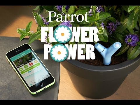 Introducing Parrot Flower Power