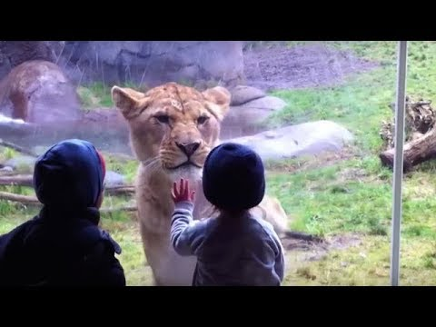 10 MOST SHOCKING MOMENTS AT THE ZOO