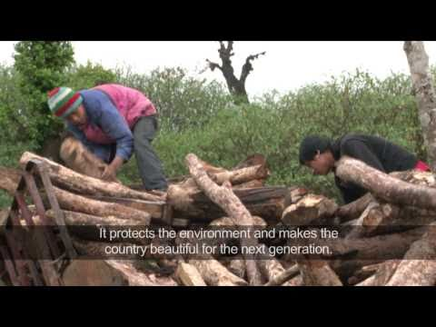 Nepal: a future for people and forests