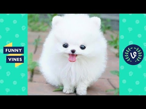 TRY NOT TO AWW! Funny and Cute Animals Videos Compilation 2017 | Funny Vine