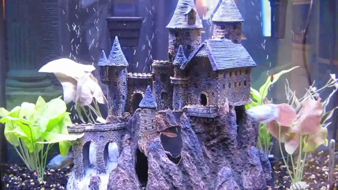 Aquarium with castle youtube for Fish tank castle decorations