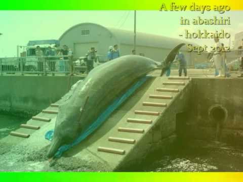 STOP KILLING WHALES [#89 ] - For rare Baked Whale killed 2012/2013 by Japan
