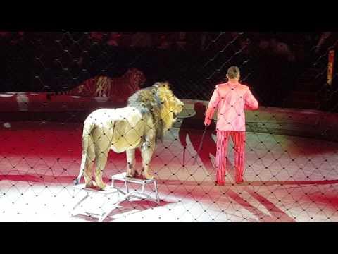 Большой цирк на Вернадского - братья Запашные