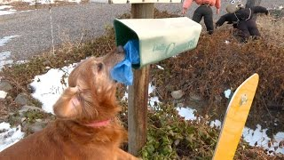 Dog delivers newspapers to neighbors