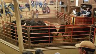 Sheeder calves 2018 selling at Guthrie Livestock Auction