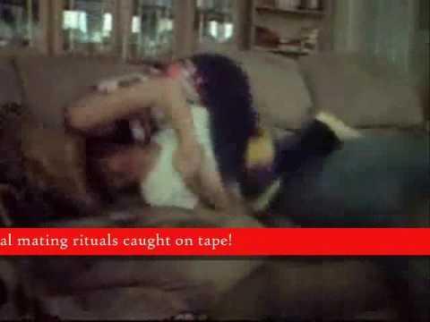 New Animal Mating Rituals - YouTube
