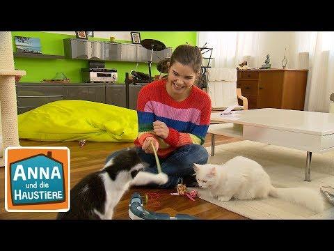 Tierheimkatze  | Information für Kinder | Anna und die Haustiere