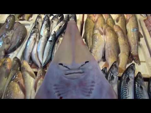Bu Balığı Görenler Şaşırıp Kalıyor