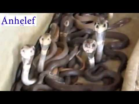 Смертельный трюк куча змей Юмор Прикол Смех YouTube