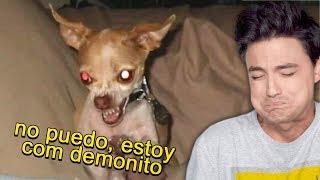 EL CACHORRITO COM DEMONITO
