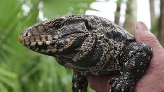 Invasive Species of Florida