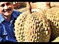 TERBONGKAR! Rahasia Besar Bibit Durian Bawor MP3