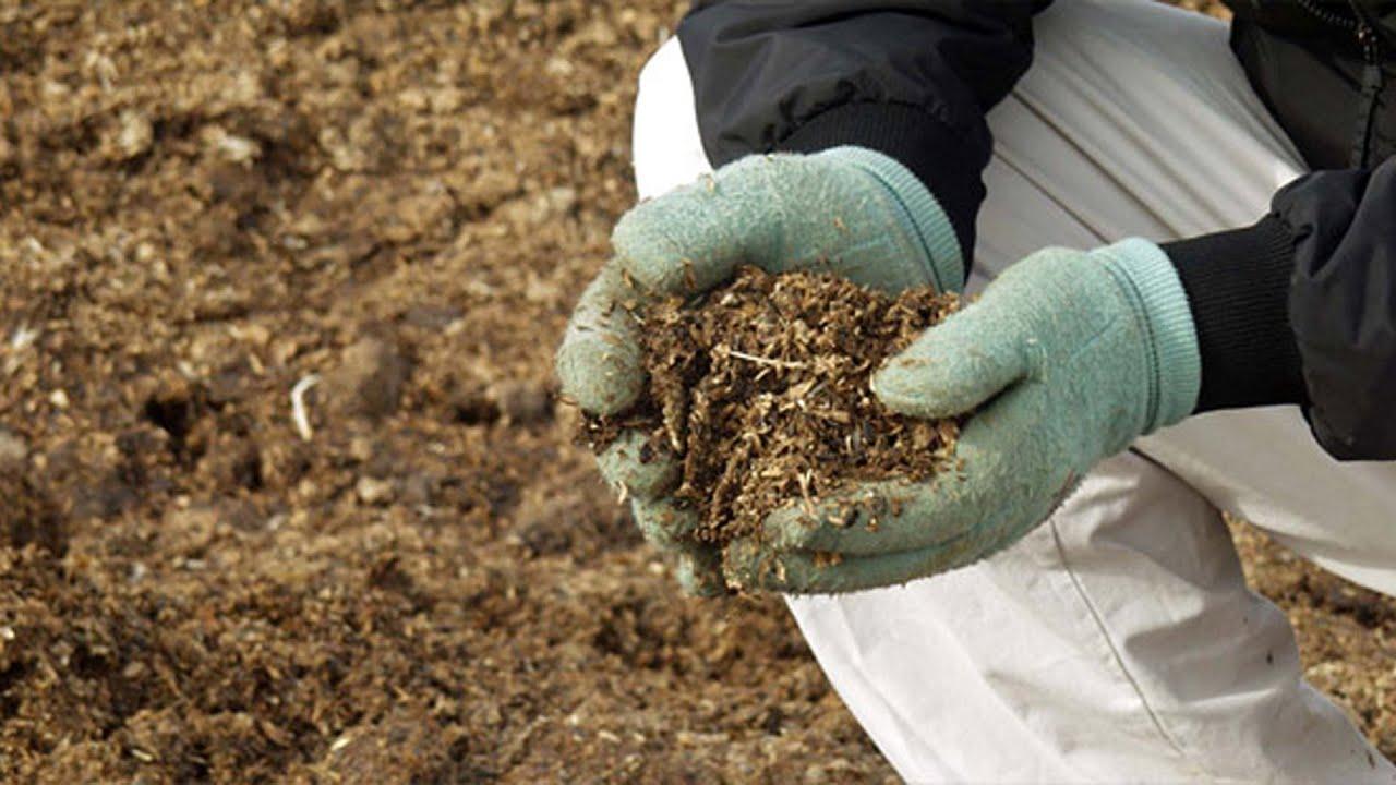 Торфяная почва. Что посадить