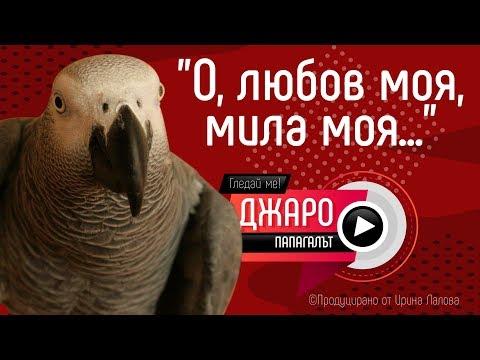 Папагалът Джаро - О, любов моя, мила моя...