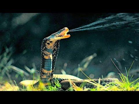 Самые ЯДОВИТЫЕ Змеи в Мире